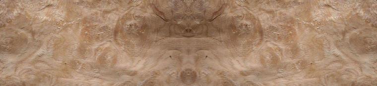 Loupe de Chêne